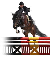 Join the Central Florida Hunter Jumper Association